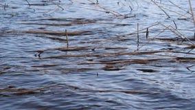 I de stora vågorna för vind på sjön lager videofilmer