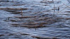 I de stora vågorna för vind på sjön arkivfilmer