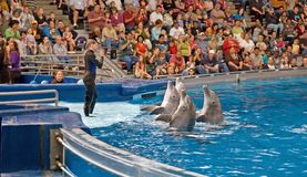 I delfini effettuano con l'addestratore della donna Fotografia Stock