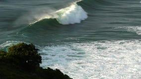 I delfini giocano nelle onde alla baia del byron video d archivio