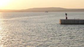 I delfini nuotano nell'area dell'acqua del porto al tramonto stock footage