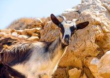 I den Amorgos ön i Grekland Arkivbilder