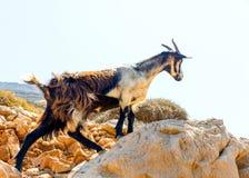 I den Amorgos ön i Grekland Arkivfoto
