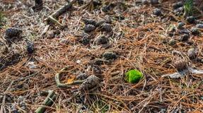 I den höstliga skogen Royaltyfri Foto