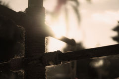 I den ljusa polen för morgon Royaltyfri Foto