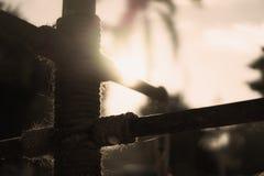 I den ljusa polen för morgon Fotografering för Bildbyråer