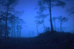 I den mörka skogen Arkivfoto