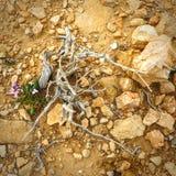I den Negev öknen och de torkade blomningväxterna nära Arkivfoto