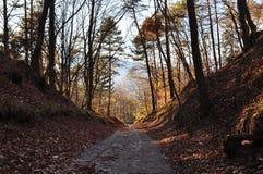 I den oavkortade hösten för trän Trentino alt adige italy Arkivfoto