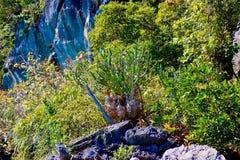 Ö i den Phang Nga fjärden, Phang Nga, Thailand Fotografering för Bildbyråer