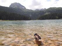 And i den svarta sjön Fotografering för Bildbyråer