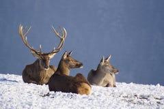I den tysta vita snön Royaltyfri Bild