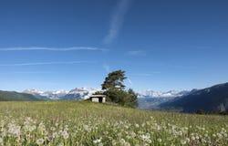 I denti di leone ed altri fiori dell'estate nelle alpi francesi con neve hanno ricoperto le montagne dei ecrins del DES del parco Fotografia Stock