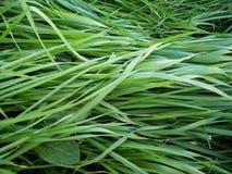 I det gröna gräset Arkivbild