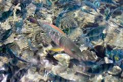 I det röda havet Royaltyfria Bilder