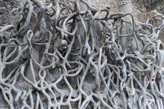 I det törstiga trädet för sommarsäsongen rotar arkivbild
