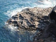 I det vidsträckta havet sloggs reven in i en honungskaka royaltyfri bild
