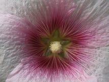I dettagli dei fiori Fotografie Stock