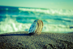I did not wait for the surf. Kamchatka. halatyrsky beach. shell near the ocean Royalty Free Stock Photo