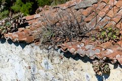 Overgrown old roof on La Palma royalty free stock photo