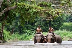 I djungeln Royaltyfri Bild