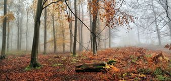 I djup skogbakgrundsbild Royaltyfri Foto