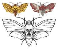 I dragonflys realistici in bianco e nero si chiudono su illustrazione di stock