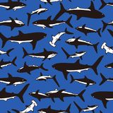 Illustration pattern of the shark,