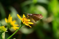 I drink nectar stock photography