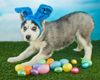 I Am Easter Bunny Stock Images