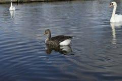 And i en lake Fotografering för Bildbyråer