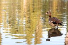 And i en lake Royaltyfri Foto