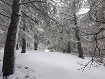I en vit skog Royaltyfri Foto