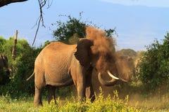 I ett dammigt moln Afrikanska elefanter Kenya Afrika Fotografering för Bildbyråer
