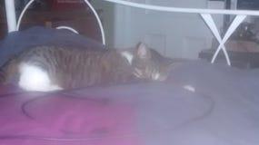 I even sleep cute Stock Photos