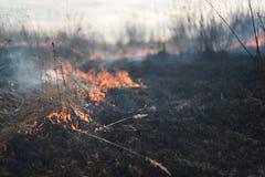 I fältbränninggräset bränns buskar och växter, land som täckas med mörker, tidig vår Arkivfoton