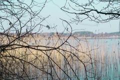 I förgrunden är trädfilialer, i bakgrunden är en sjö royaltyfri bild