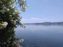 I förgrunden en blomstra oleander I det tillbaka havet och himlen Arkivbilder