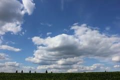 I fagioli della soia hanno coltivato il campo nel giorno soleggiato con il cielo nuvoloso blu Immagini Stock Libere da Diritti