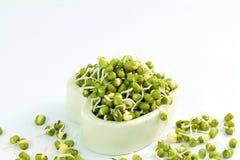 I fagioli verdi germogliati freschi o i fagioli di grammo verde nel cuore lanciano Fotografia Stock