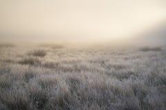 I fasci sbalorditivi del sole accendono la nebbia attraverso nebbia spessa di Autumn Fall Fotografie Stock