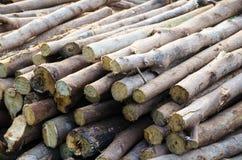 I fattori ambientali appropriati Fattori ambientali, ragionevoli Immagine Stock Libera da Diritti