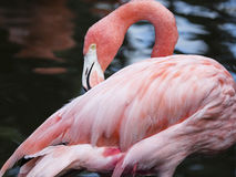 I am feeling totally pink today! Stock Photos