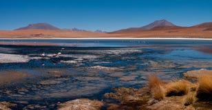 I fenicotteri di Laguna Colorada del Altiplano del sud della Bolivia Fotografie Stock