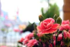 I fiori Fotografie Stock