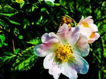 I fiori Immagini Stock