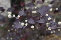 I fiori accanto al recinto Fotografia Stock