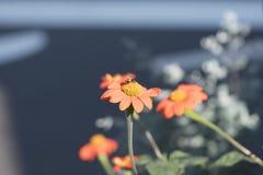 I fiori attirano le api, quella è un fatto Fotografie Stock