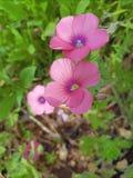 i fiori balzano passeggiata immagine stock