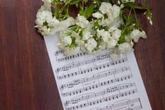 I fiori bianchi del flox su musica nota lo strato Tabella di legno Vista superiore Immagini Stock Libere da Diritti